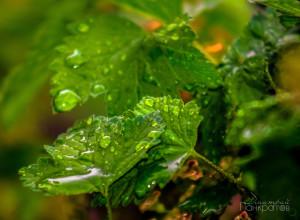 после дождя-2