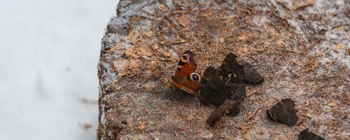 бабочки-8